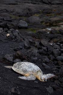 Turtle by morten larsen