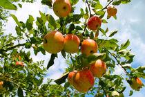 Unter`m Apfelbaum by M. Ziehr