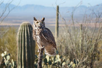 Surveying the Sonoran von Kathleen Bishop
