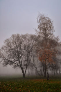 foggy morning 2 by Péter Fodor