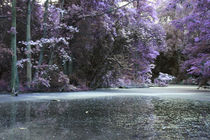 der Teich im Wald von lorenzo-fp
