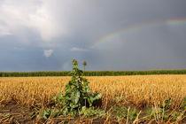 Regenbogen-22