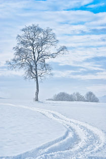 Winter Loneliness by Uli Gnoth