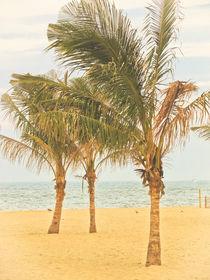 Palm Trees von Colleen Kammerer
