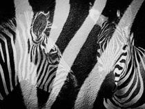 Zebra by Stefanie Feldhaus