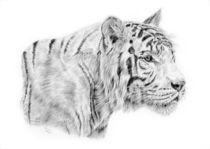 White-tiger-for-prints