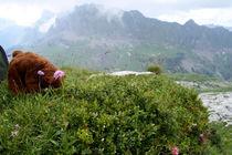 Bären-Yoga in den Alpen by Olga Sander