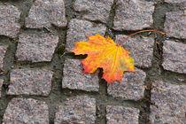 Autumn 01 by Tom Uhlenberg