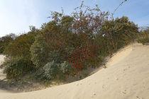 Langeoog / Dünenlandschaft im Herbst von Jens Uhlenbusch