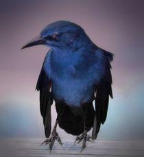 Edgar Allan by O.L.Sanders Photography