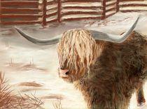 Highland Bull by Anastasiya Malakhova