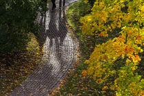 Autumn 02 by Tom Uhlenberg