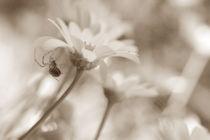Weben by Bastian  Kienitz