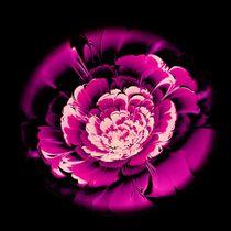 Pink-flower-anastasiya-malakhova