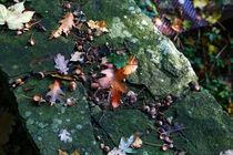 Herbstboten von Jens Uhlenbusch