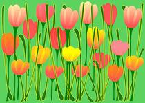 Tulips-anastasiya-malakhova