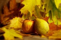 Jahreszeiten Poster der Herbst von Tanja Riedel