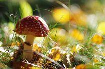 Im Zauber des Märchenwaldes von Tanja Riedel