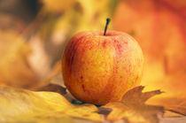 Feiner Apfel Genuss von Tanja Riedel