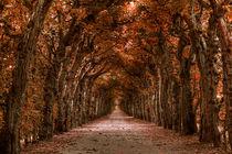 Herbstlich von foto-m-design