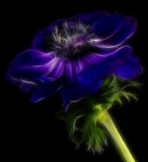 Anemone fractal by foto-m-design