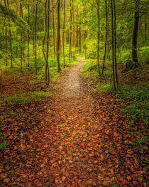 Path von Maciej Markiewicz