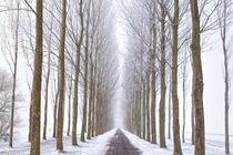 Path in the fog by Olha Rohulya