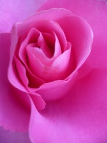 Séduction rose von Andrea Hensen