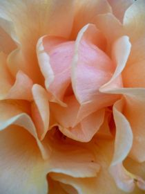 Abricot-rose