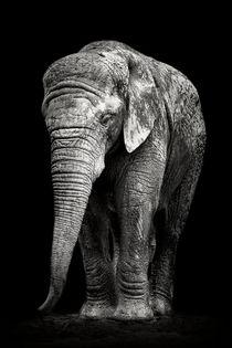 Trauriger Elefant von Martin Dzurjanik
