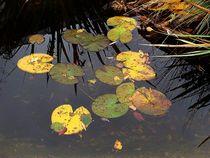Herbst im Wasser by Elke Balzen