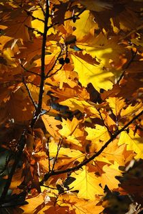 Herbstlaub by Elke Balzen