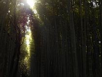 Arashiyama #1 by Sergio Cabrera