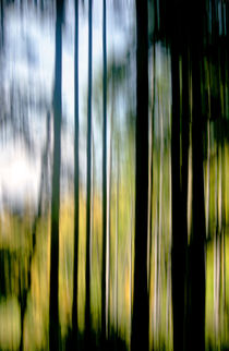 Im lichten Fichtenwald von Heidrun Lutz
