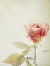 A-rose4