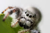 white hairy spider close up von Craig Lapsley