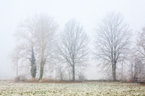 Foggy Winter Trees by moonbloom
