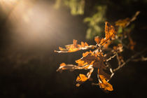 Blackebergs hösten by Gustavo Oliveira
