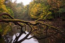Hamburg Natur im Herbst I by elbvue