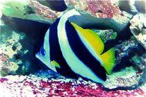 Gemeiner Wimpelfisch by mario-s