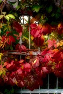 Herbstfarben von mario-s