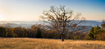 Lone tree, Blue Ridge Mt, Shenandoah NP, Virginia von Tom Dempsey