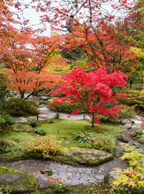 Japanese maple, fall garden stream, Seattle von Tom Dempsey