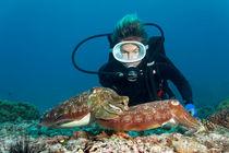 Trustful Cuttlefish von Norbert Probst