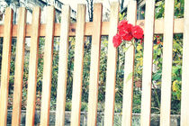 Rote Rosen by britty