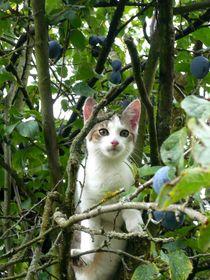 Katze im Pflaumenbaum von Wolfgang Schwerdt
