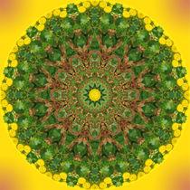 Rainfarn-Sauerampfer-Mandala by Sabine Radtke