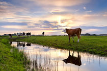 Cows at sunset by Olha Rohulya
