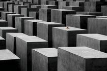 Holocaust-denkmal-rose
