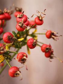 Rosenäpfelchen by pichris
